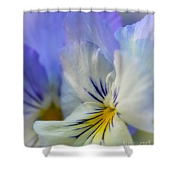 Soft White Pansy Shower Curtain by Amy Porter