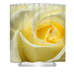 Soft Yellow Rose Shower Curtain