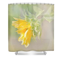 Shower Curtain featuring the photograph Soft Yellow Sunflower Just Starting To Bloom by Patti Deters