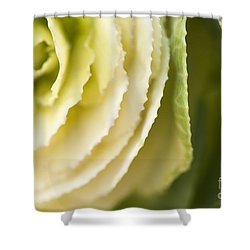 Softly Green Shower Curtain by Anne Gilbert