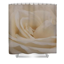 Shower Curtain featuring the photograph Soft Cream Rose Closeup by Sandra Foster