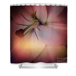 Softness  Shower Curtain