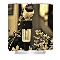Shower Curtain featuring the photograph Solar Light Sitting by VLee Watson