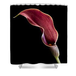 Solitary Calla  Shower Curtain by Jean Noren