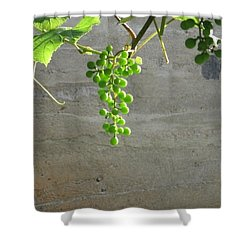 Solitary Grapes Shower Curtain