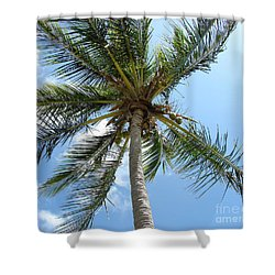 Solitary Palm Shower Curtain