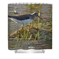 Solitary Sandpiper 2 Shower Curtain by James Petersen