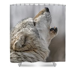 Solo Song II Shower Curtain
