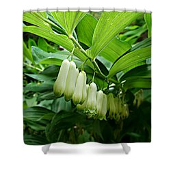 Shower Curtain featuring the photograph Wild Solomon's Seal by William Tanneberger