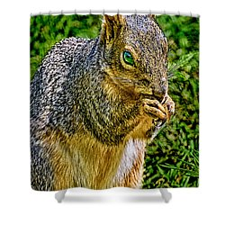 Some Squirrels Are Big Shower Curtain by Bob and Nadine Johnston