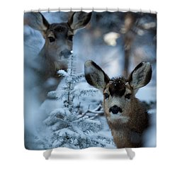 Shower Curtain featuring the photograph Somebody To Watch Over Me by Jim Garrison