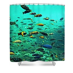 Something Fishy Shower Curtain by Kevin Fortier