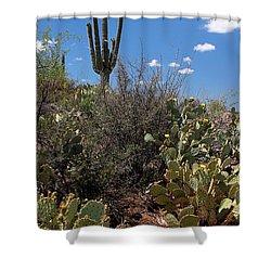 Sonoran Desert Spring Shower Curtain by Joe Kozlowski