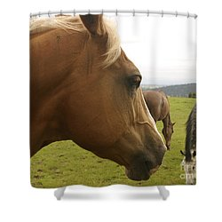 Shower Curtain featuring the photograph Sorrel Horse Profile by Belinda Greb