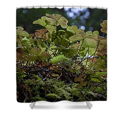 Sorrel Shower Curtain