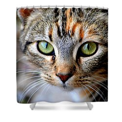 Shower Curtain featuring the photograph Soul Cat by Deena Stoddard