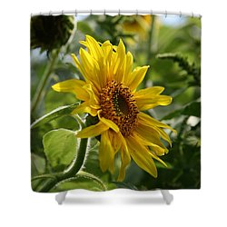 Shower Curtain featuring the photograph Soulshine No.2 by Neal Eslinger