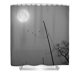 South For The Winter Shower Curtain by Brian Wallace