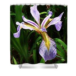 Southern Blue Flag Iris Shower Curtain