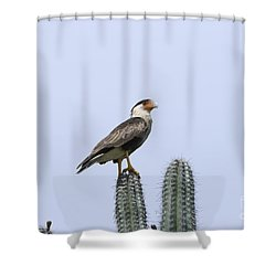 Shower Curtain featuring the photograph Southern Crested-caracara Polyborus Plancus by David Millenheft