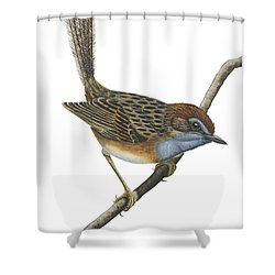Southern Emu Wren Shower Curtain by Anonymous