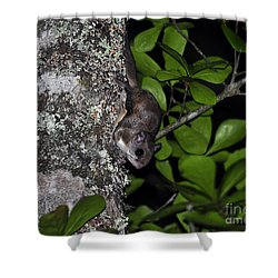Southern Flying Squirrel Shower Curtain