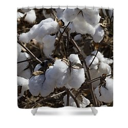 Southern Plantation Cotton Shower Curtain by Kathy Clark