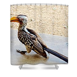 Southern Yellow-billed Hornbill In Kruger National Park-south Africa Shower Curtain