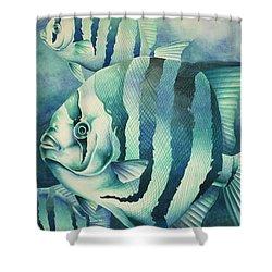 Spadefish Shower Curtain by William Love