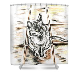 Spanish Cat Waiting Shower Curtain