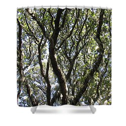 Spanish Moss Oak Shower Curtain