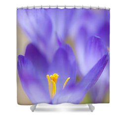 Spark Of Spring Shower Curtain by Jean-Pierre Ducondi