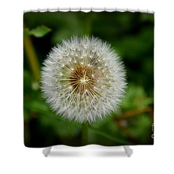 Sparkling Dandelion Shower Curtain by Debra Martz