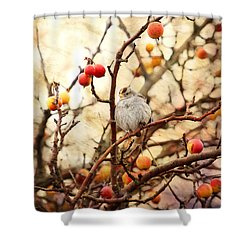 Sparrow In A Crab Apple Tree Shower Curtain by Peggy Collins