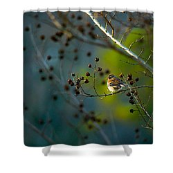 Sparrow In The Warm Light Shower Curtain by Shelby  Young