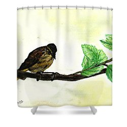 Sparrow On A Branch Shower Curtain by Francine Heykoop