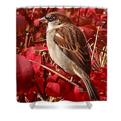 Sparrow Shower Curtain by Rona Black
