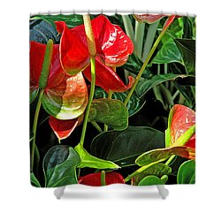Shower Curtain featuring the photograph Spathiphyllum Flowers Peace Lily by A Gurmankin