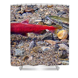 Shower Curtain featuring the photograph Spawning Pair by Jim Thompson