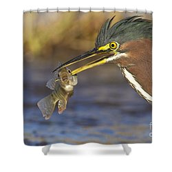 Shower Curtain featuring the photograph Speared by Bryan Keil
