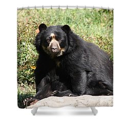 Speckled Bear Shower Curtain by John Telfer