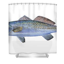 Speckled Trout Shower Curtain by Carey Chen