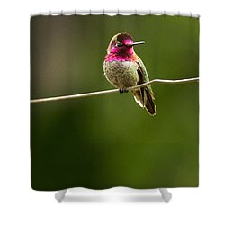 Speedy Slows Down Shower Curtain by Jean Noren