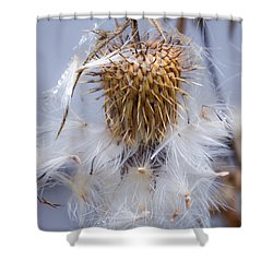 Spent Thistle Shower Curtain
