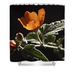 Sphaeralcea Ambigua Shower Curtain by Joe Schofield