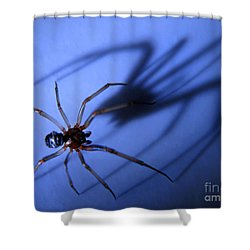 Spider Blue Shower Curtain by Jennie Breeze