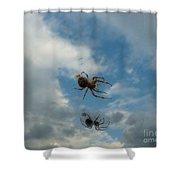 Spider Shower Curtain by Jane Ford