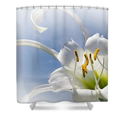 Spider Lily Shower Curtain by Jane McIlroy