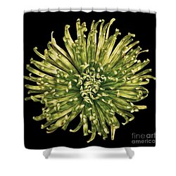 Spider Mum Shower Curtain by Jerry Fornarotto
