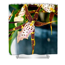 Spider Orchid Shower Curtain by Lehua Pekelo-Stearns